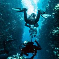 plongeurs niveau 2